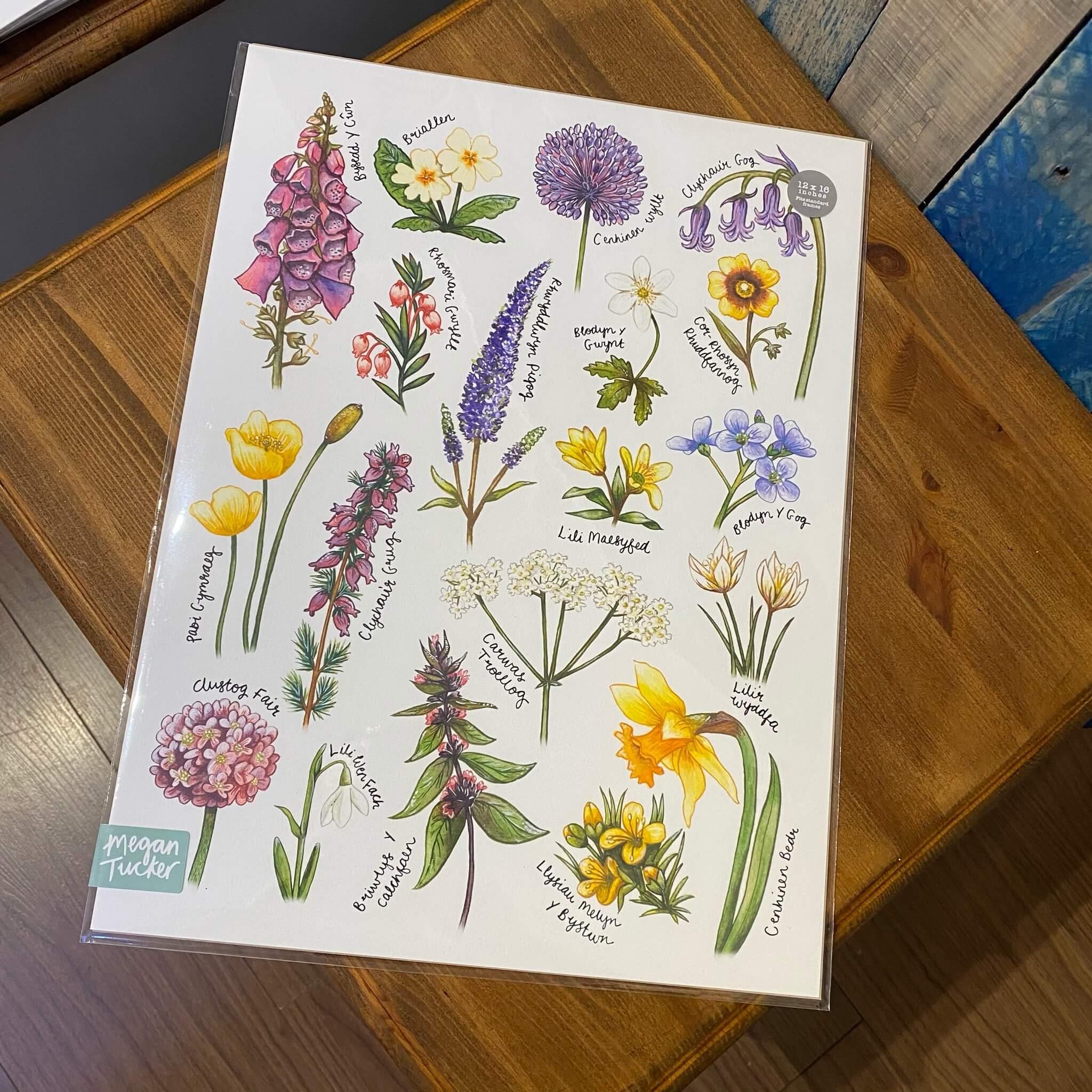 Welsh Wildflower Print