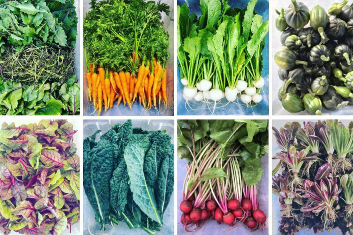 Grönsakskasse - Höst - 8 veckor prenumeration