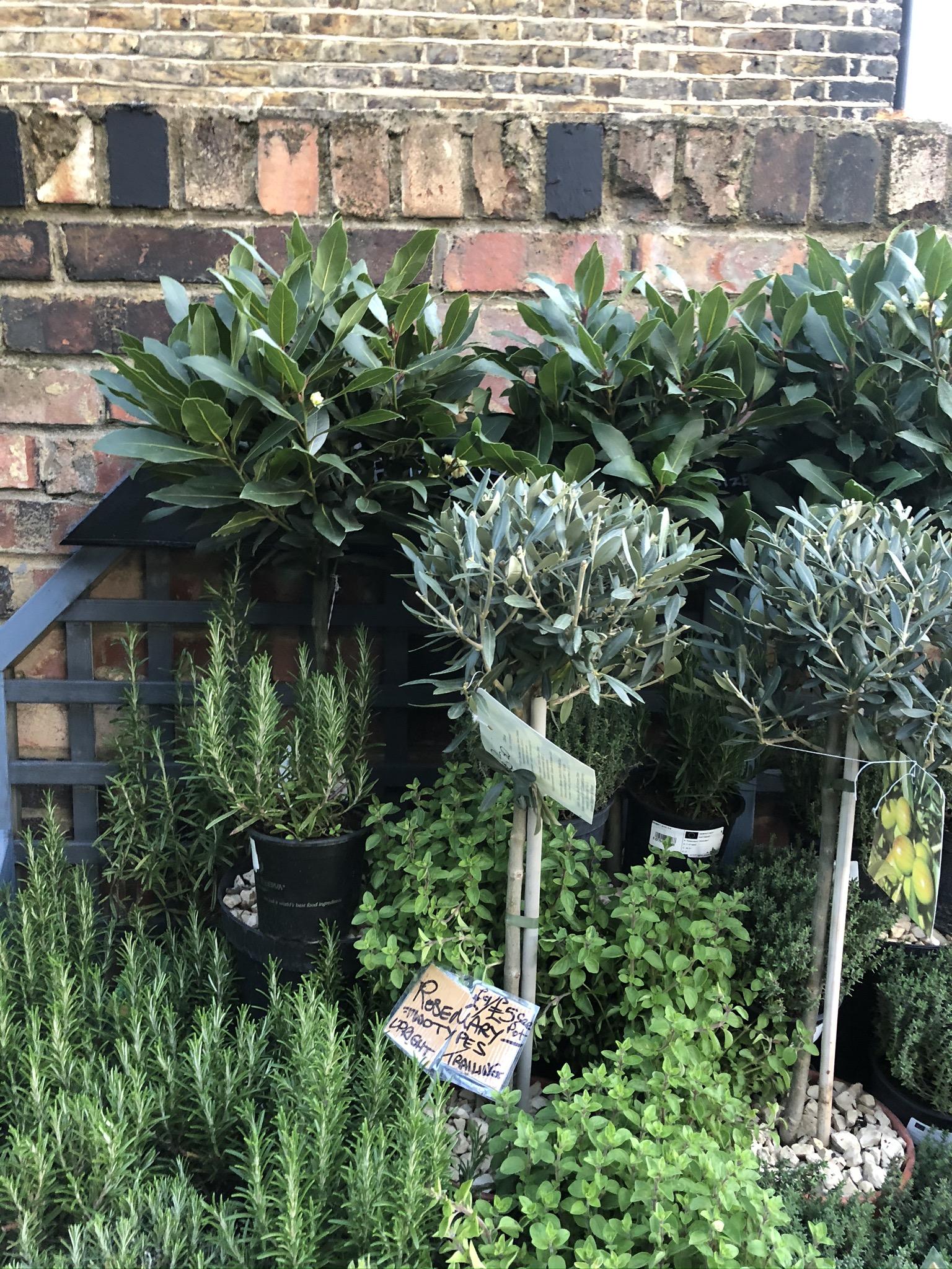 Alan's Plants