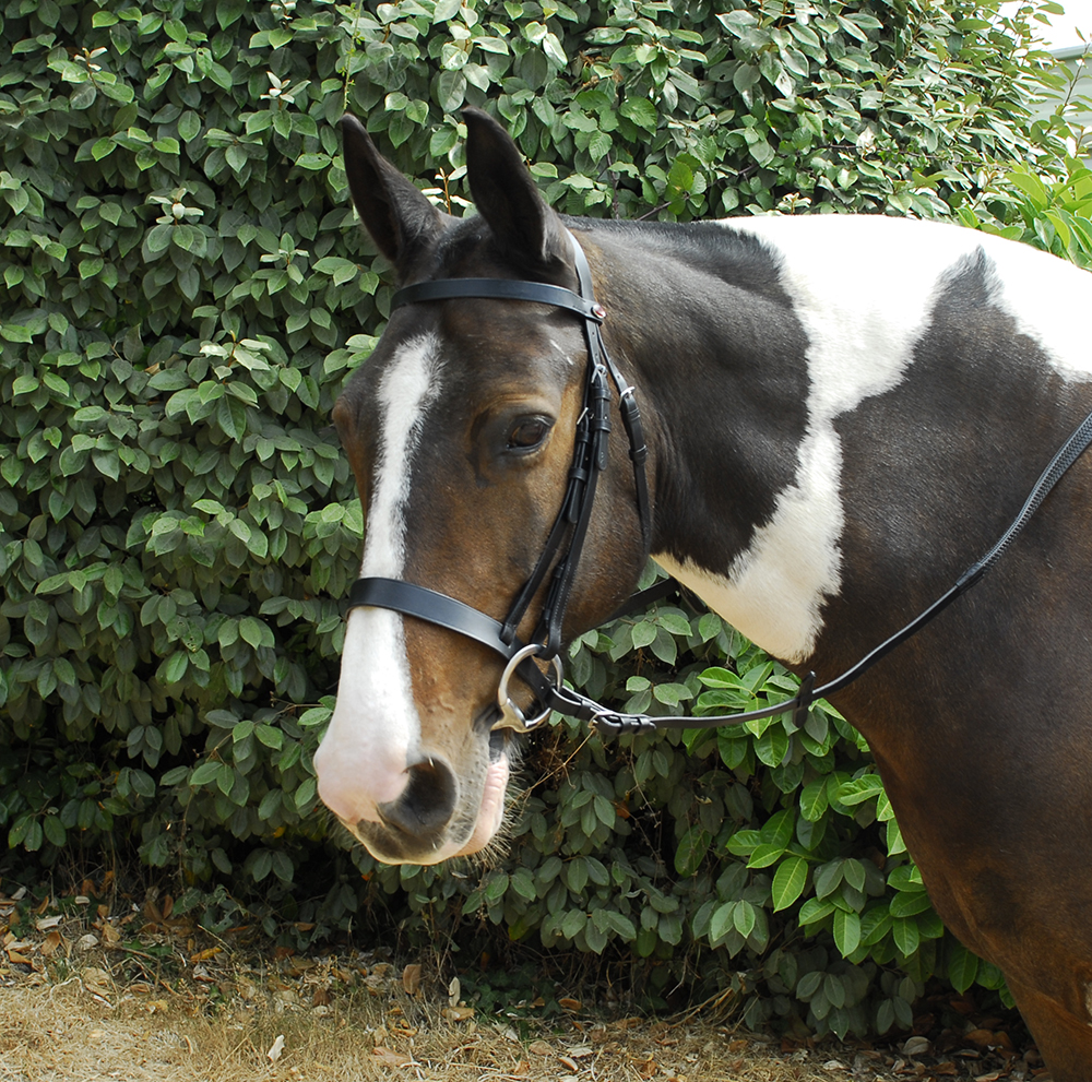 Windsor Leather Hunter Bridle With Wide Caversson Noseband Black