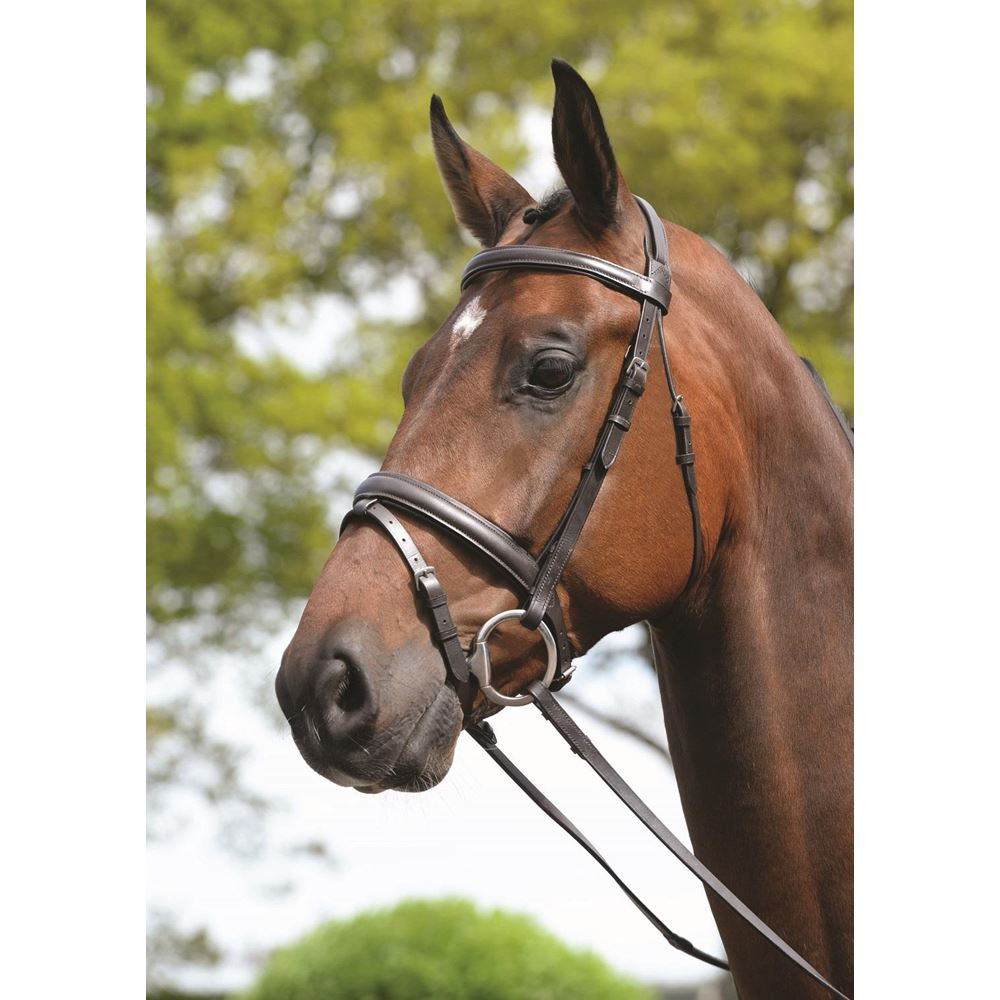 Kincade Padded Headpiece Flash Bridle  With Reins