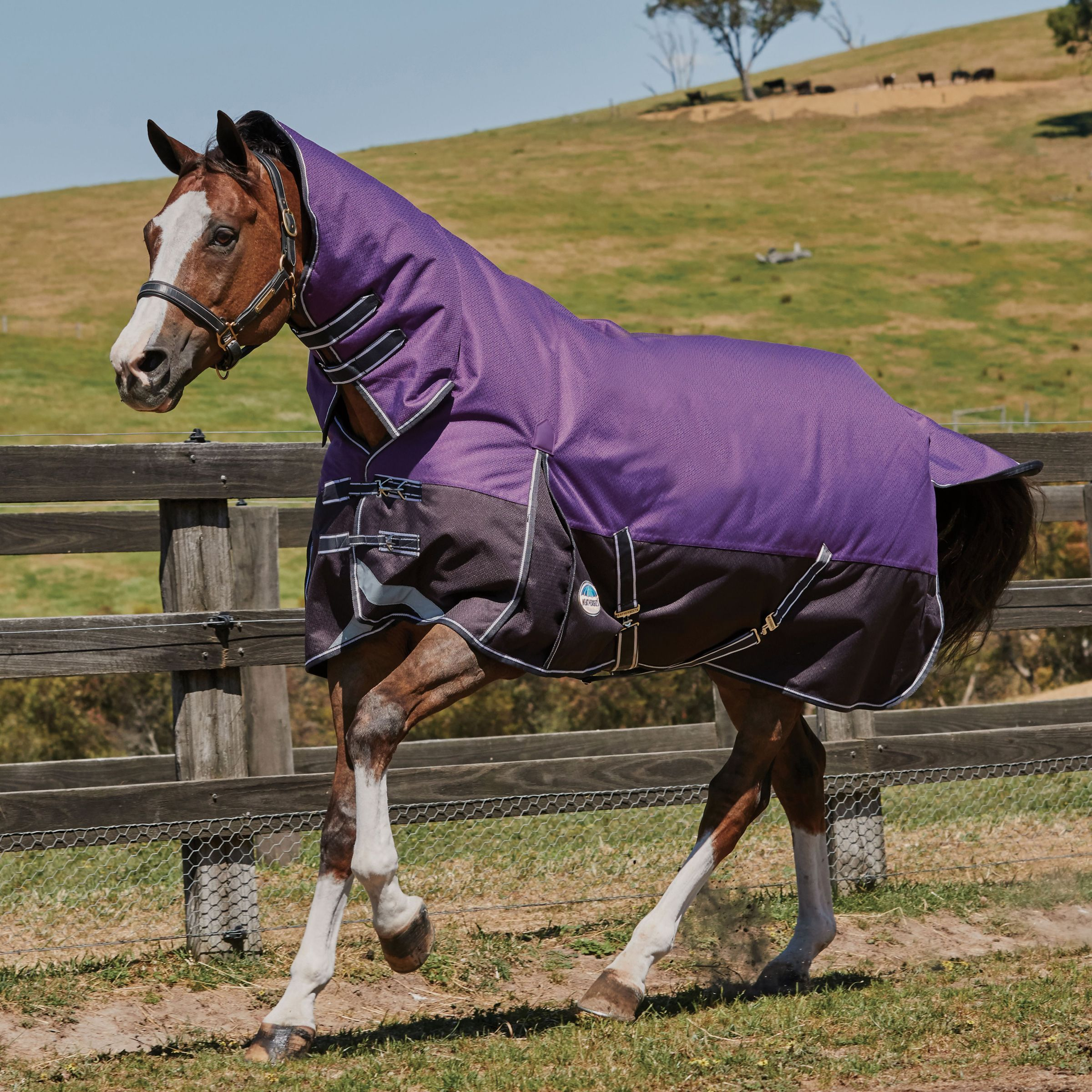 Weatherbeeta ComFiTec Plus Dynamic Combo Neck 220g Medium Rug