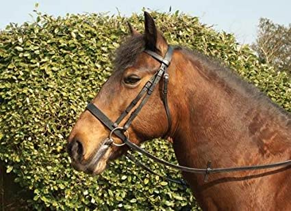 Windsor Leather Hunter Bridle With Wide Caversson Noseband Brown