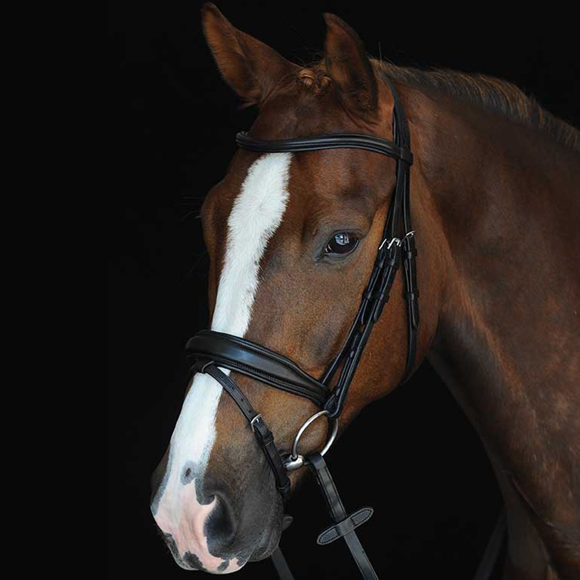 Collegiate Mono Crown Padded Raised Flash Bridle