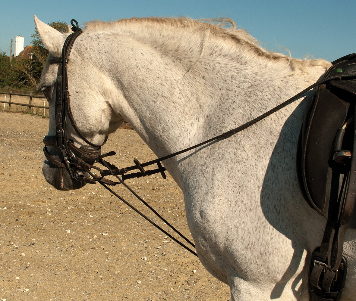 Rhinegold Fully Elasticated Training Reins