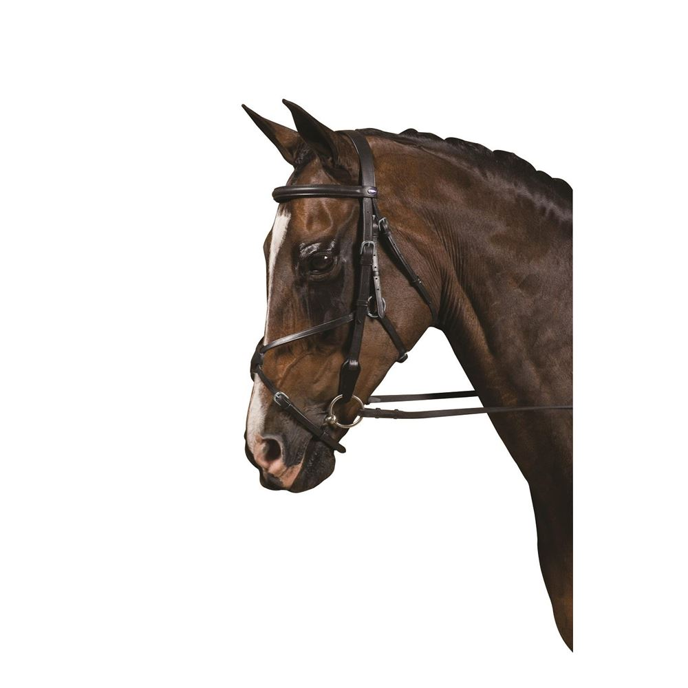 Collegiate Grackle Bridle
