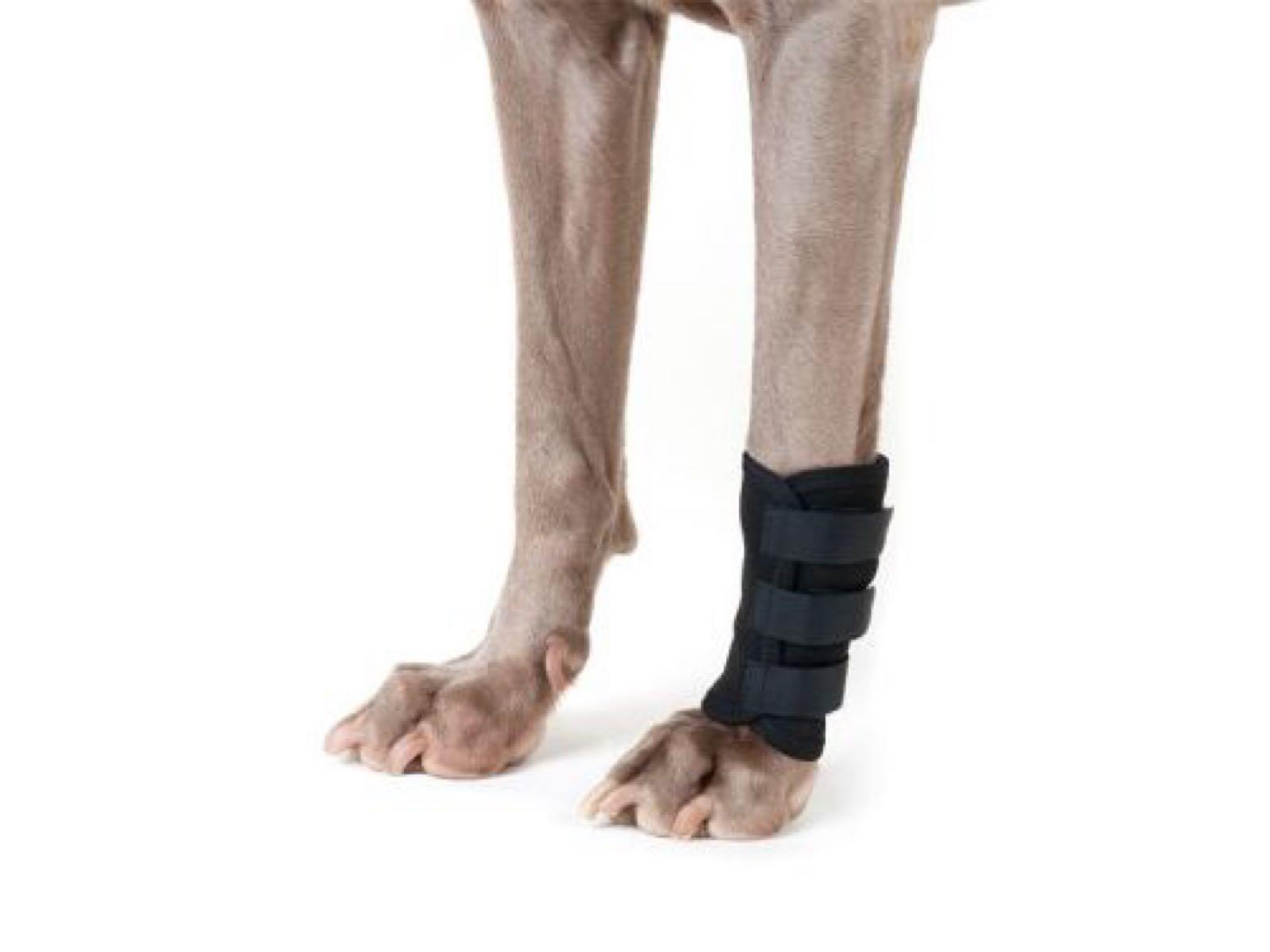 Back on Track Leg support