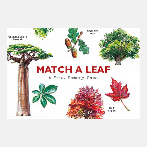 Match a Leaf  - Tree Memory Game