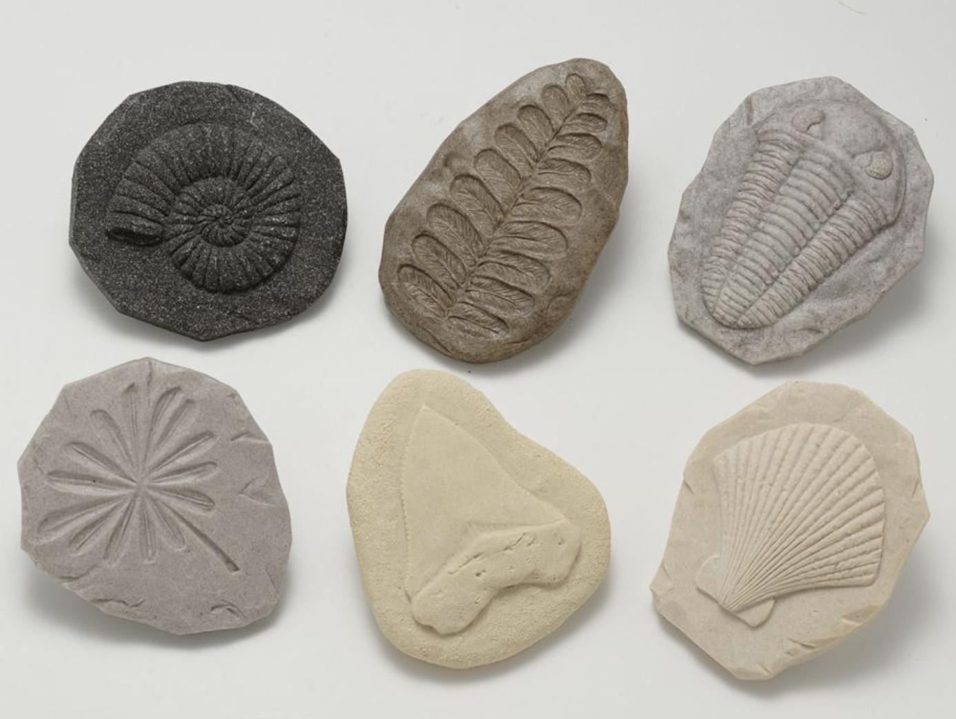 Yellow Door - Play Fossils
