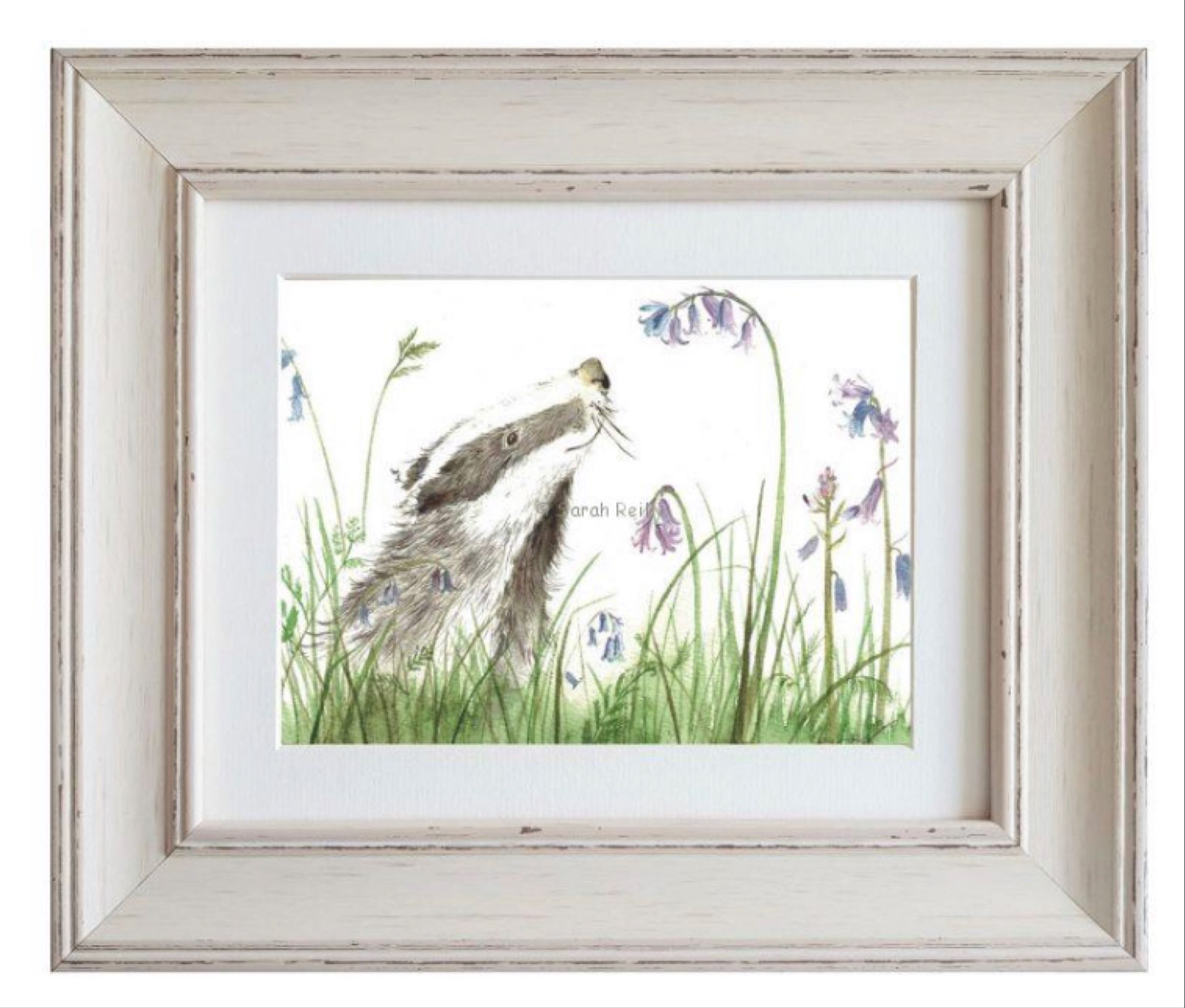 Blissful Badger Framed Print by Sarah Reilly 28cmx33cm