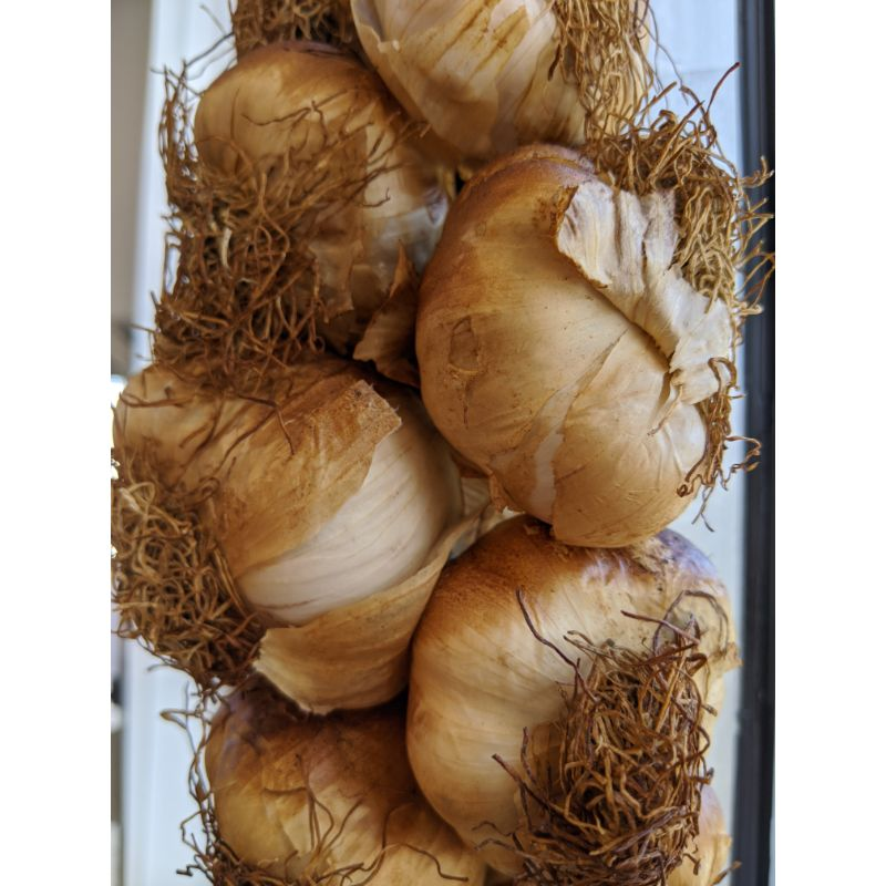Garlic - smoked pc