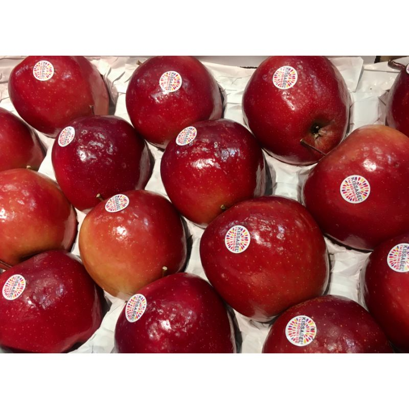 Apple - Gala / Red pc