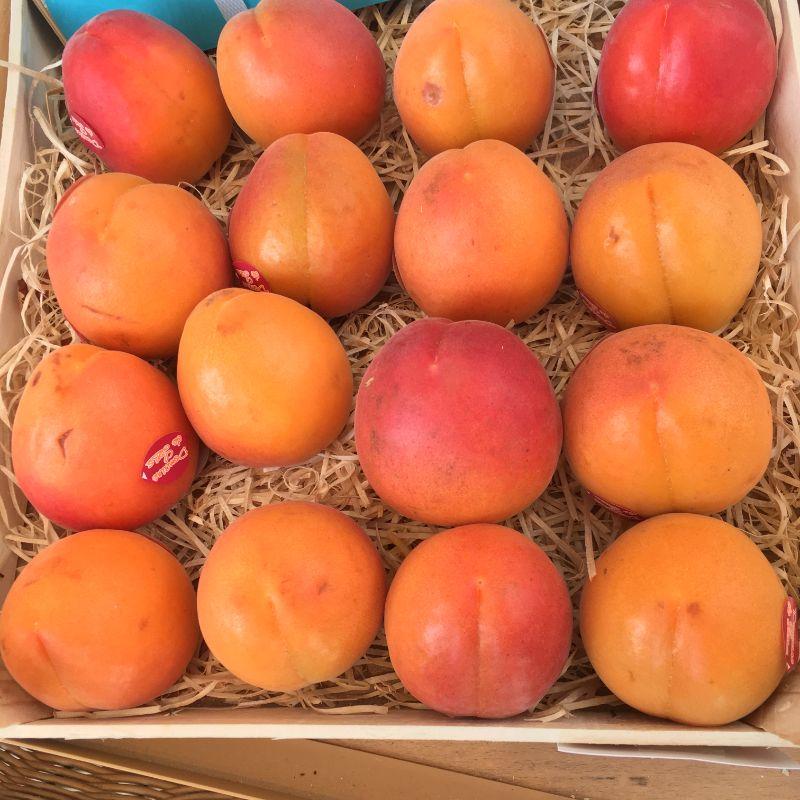 Apricot large pc