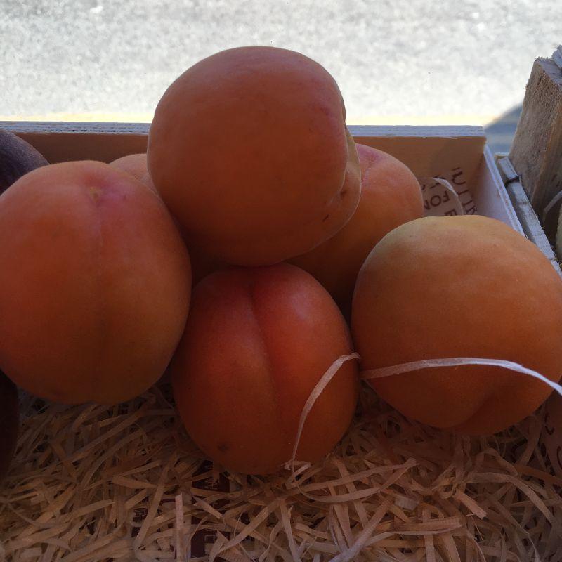 Apricot pc