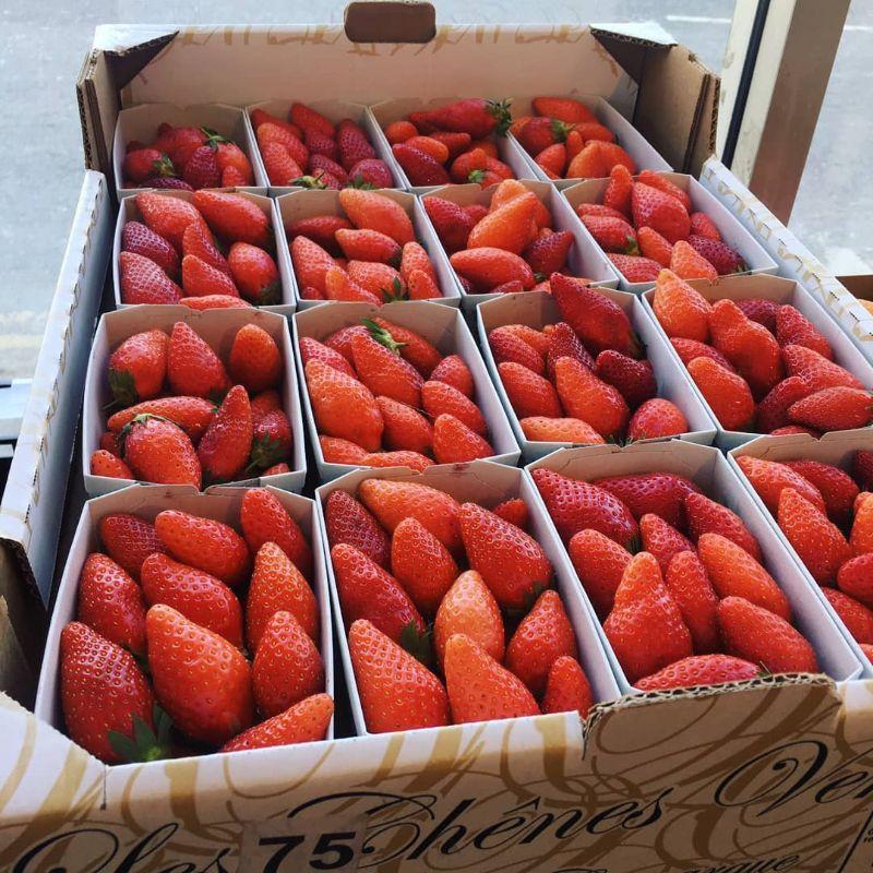 Strawberries (Gariguette)