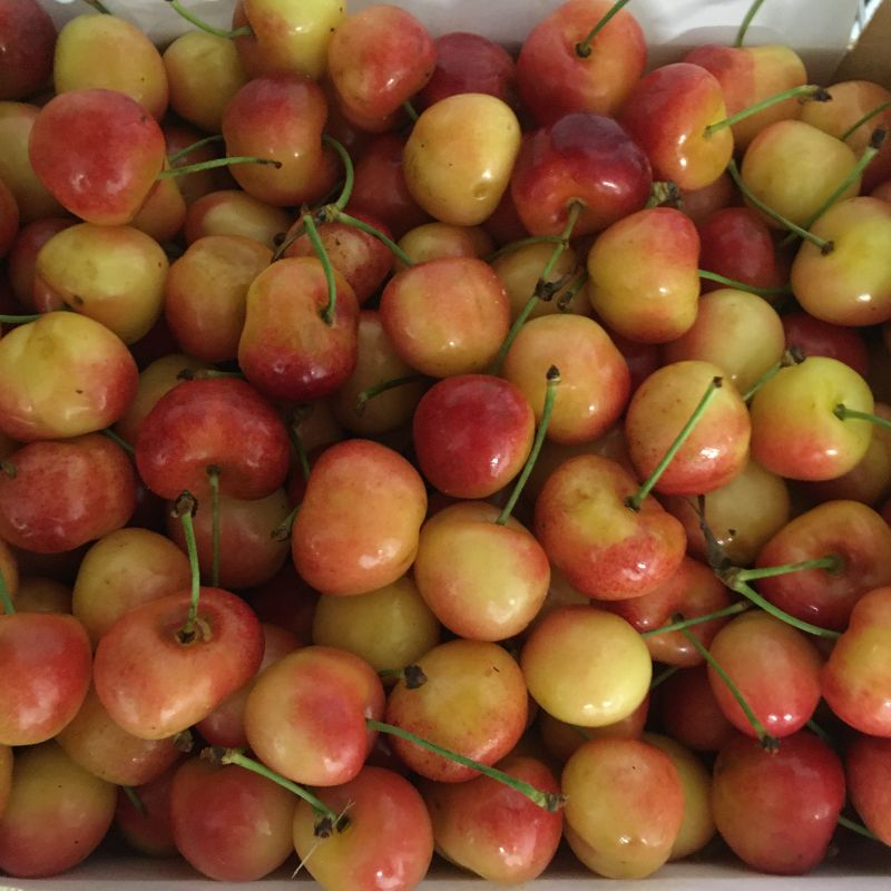 Cherries Rainier White 250g