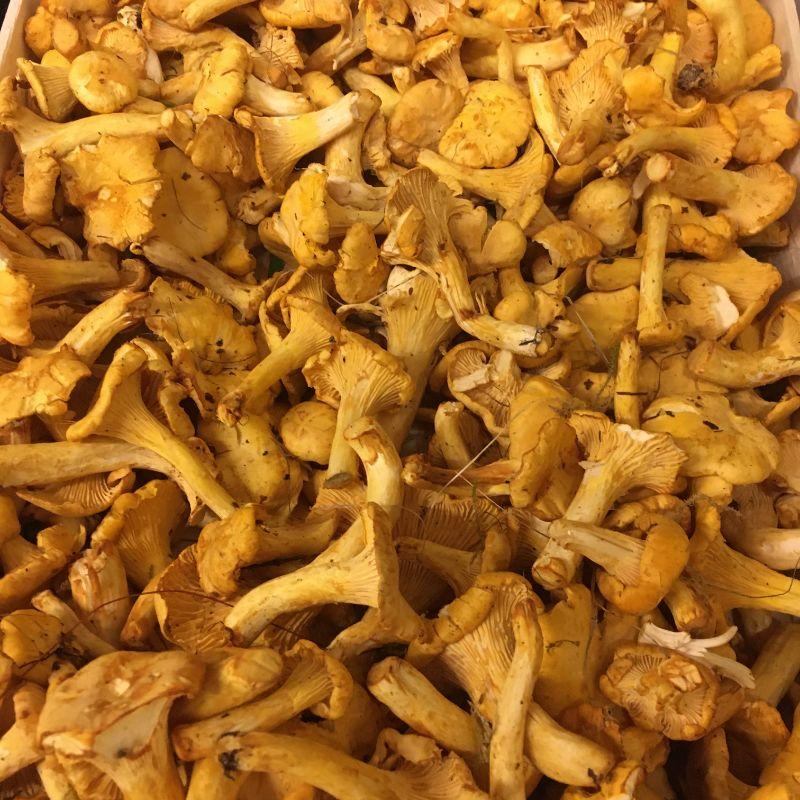 Mushroom Chantarelles 200g