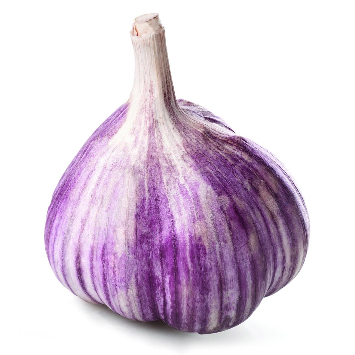 Garlic - Purple