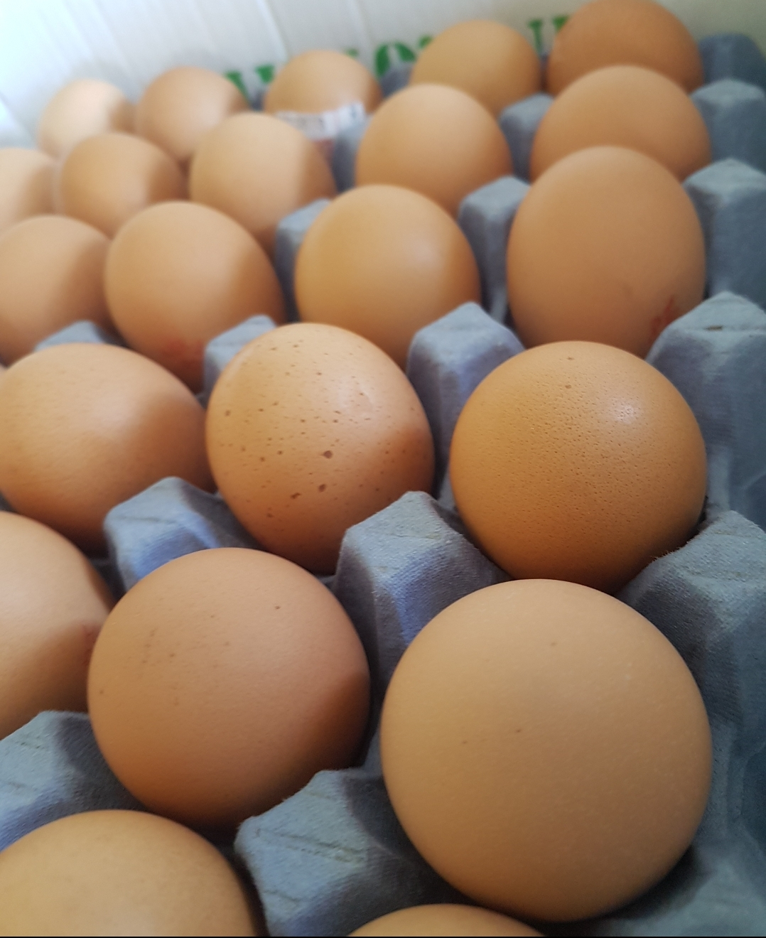Large Hen's Eggs Tray (30 eggs)