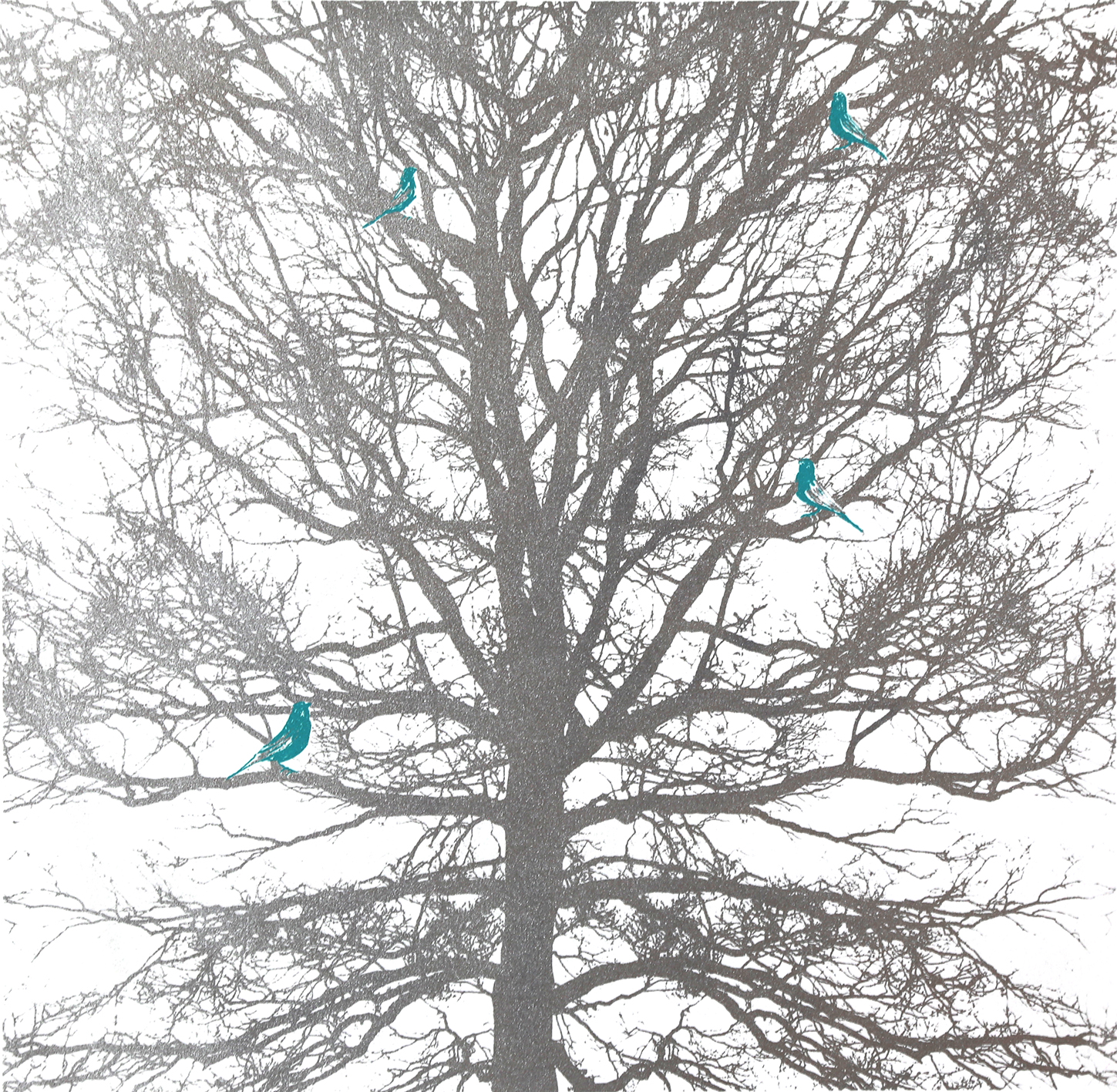 CACHE-CACHE (Silver and blue) - Are there really green parakeets in Hampstead Heath?