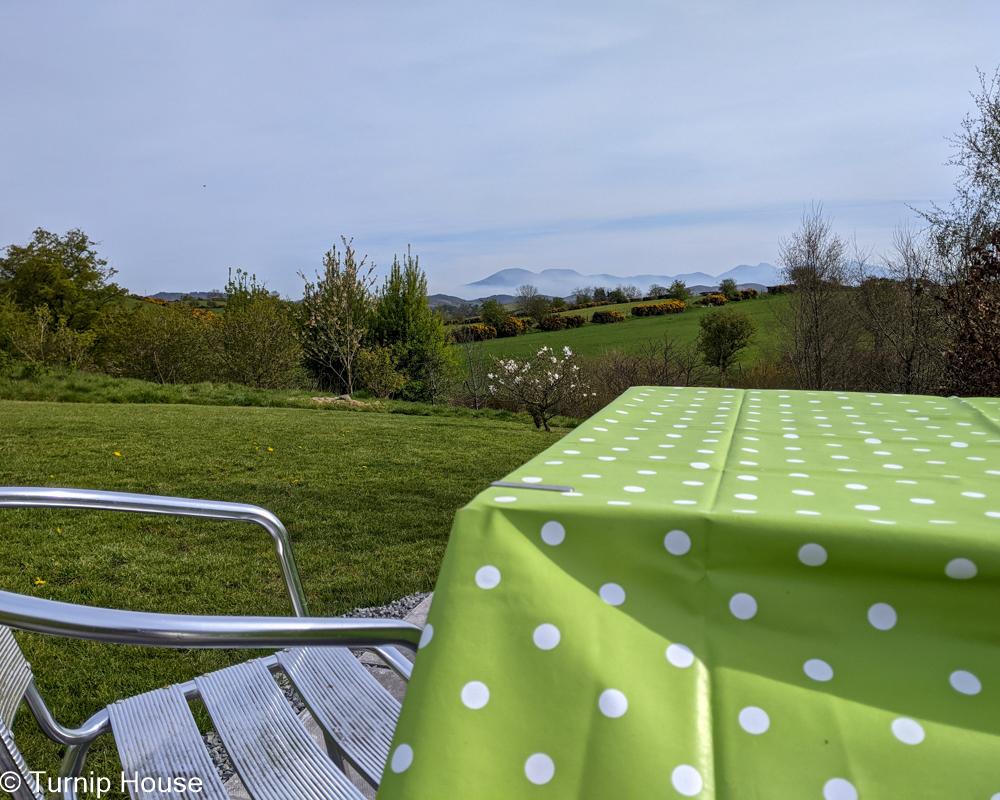 Lawn Honeysuckle Table 26th September