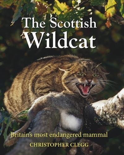 The Scottish Wildcat