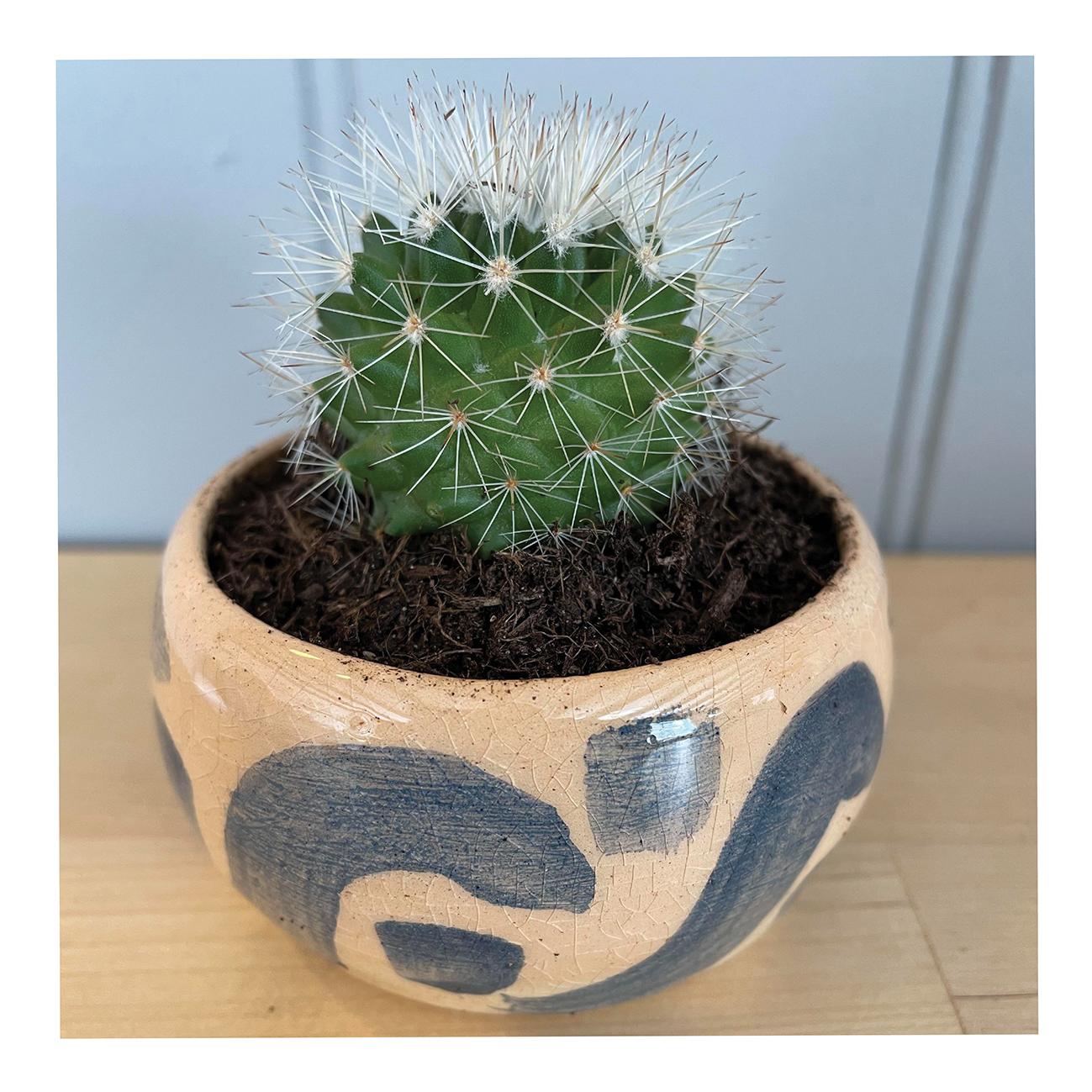 cactus / succulent