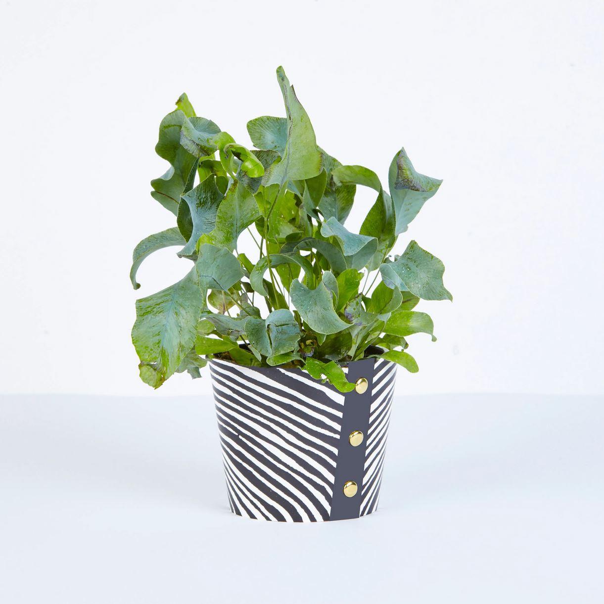 Wald - Medium Plant Pot Cover