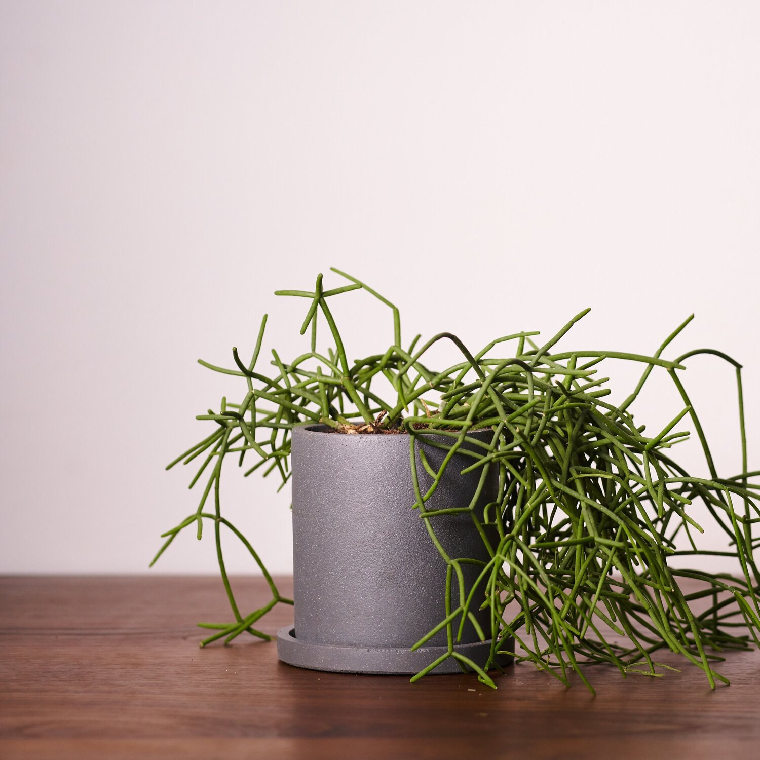 "Anther + Moss - ""Dalton"" Concrete Plant Pot"