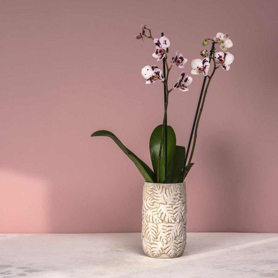Azalea Vase Cream by Dassie Artisan