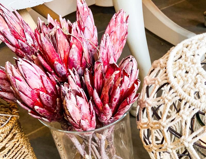 Protea Natur - weinrot