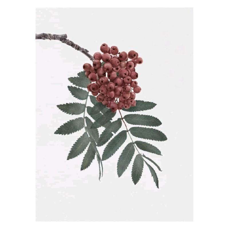 rowanberries 30x40cm