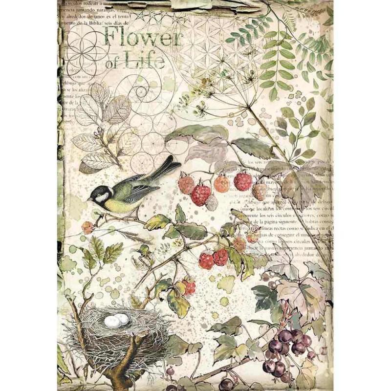 Riisipaperi Stamperia, A4-koko, Forest lintu