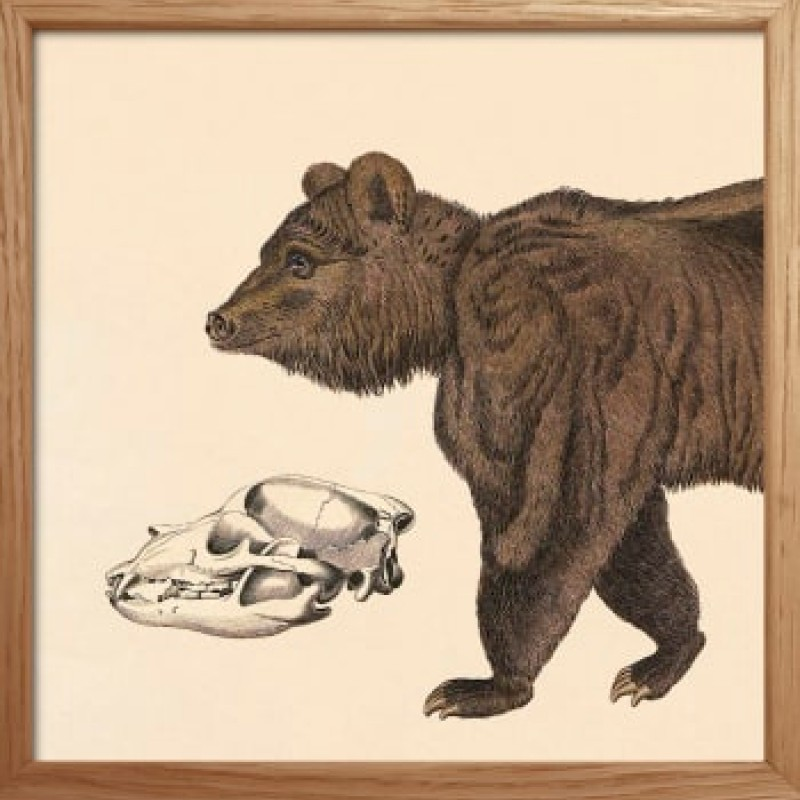 Mini Bear Split x 2