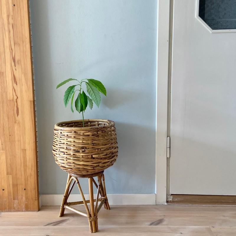 Piedestal, bambu och rotting