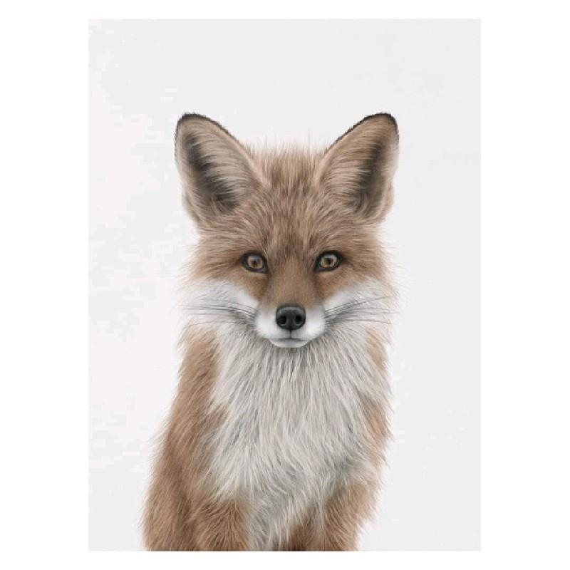 fox 30x40cm
