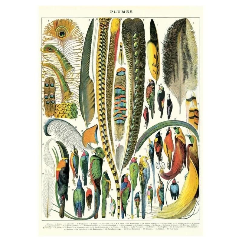Cavallini Papers - Poster Fjädrar