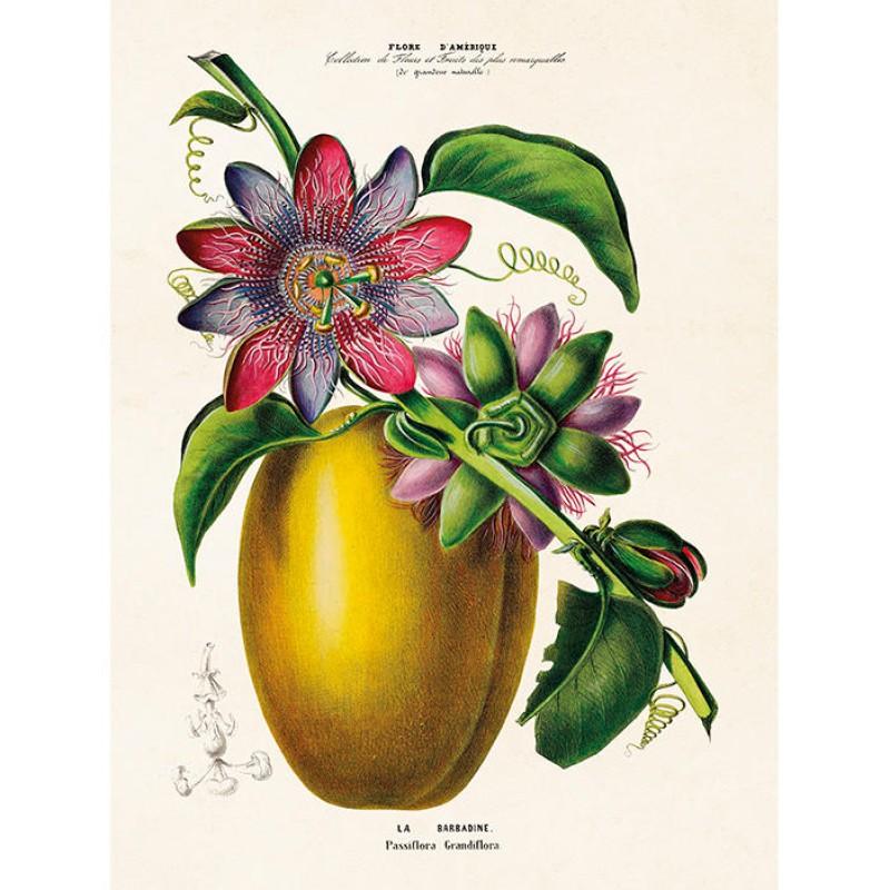 Sköna Ting - Poster Passionsfrukt 18x24 cm