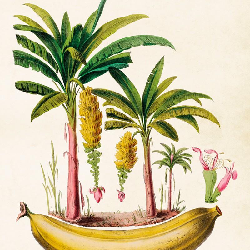 Sköna Ting - Poster Banan 50x70 cm