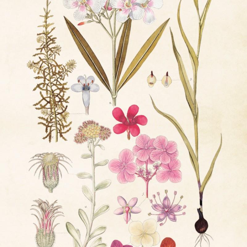 Sköna Ting - Poster Blomster 35x50 cm