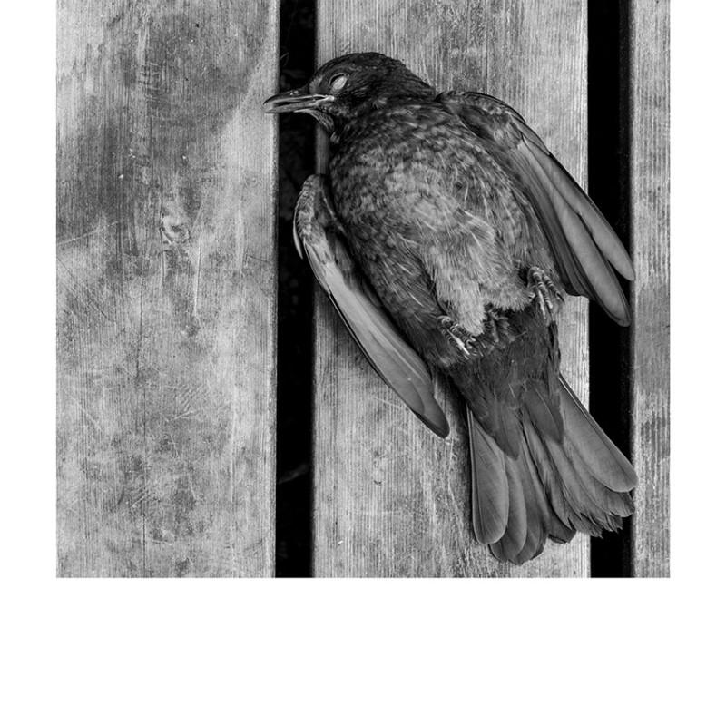 Vem blir du när fågelsången tystnat | 30x40 cm