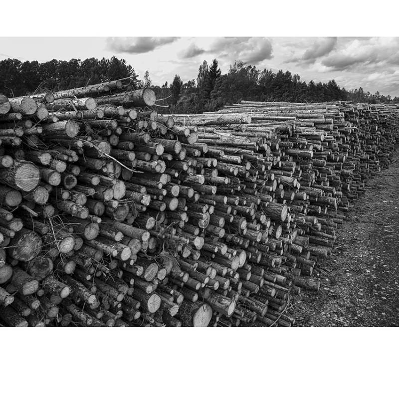 Här vilar minnet av en skog   50x40 cm