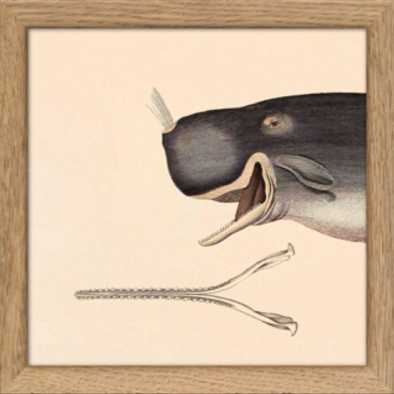 Whale Split x 2