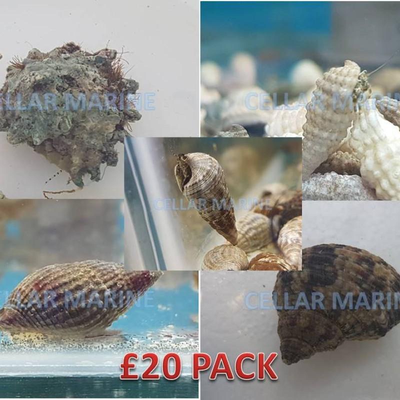 £20 CUC Pack
