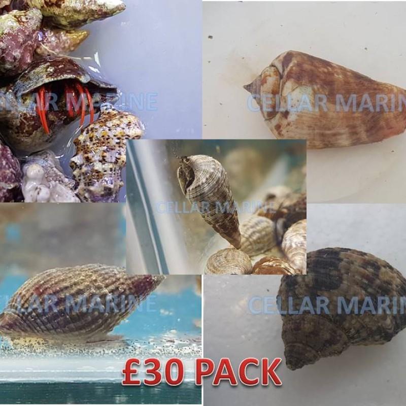 £30 CUC Pack