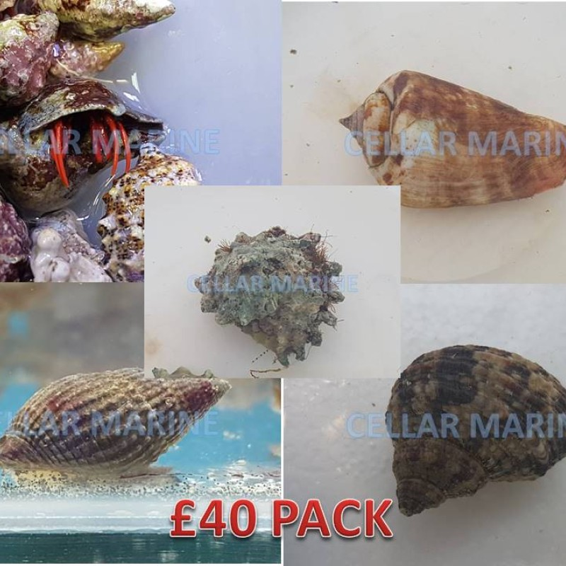 £40 CUC Pack