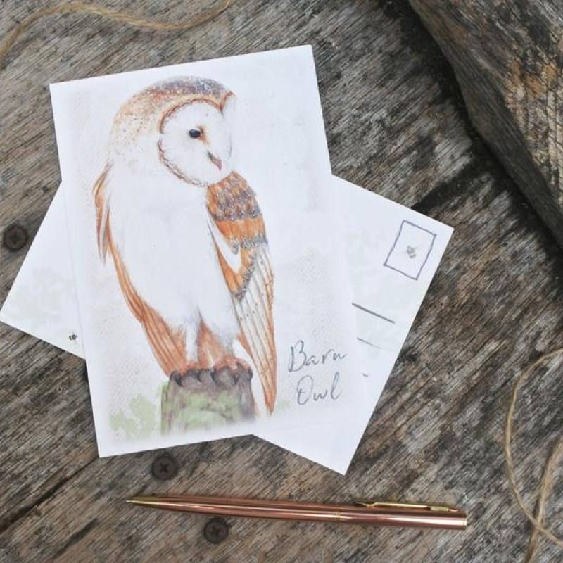 Barn Owl Postcard By Miss Meaney's
