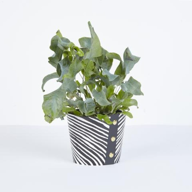 Small  Plant Pot Cover by Studio Wald