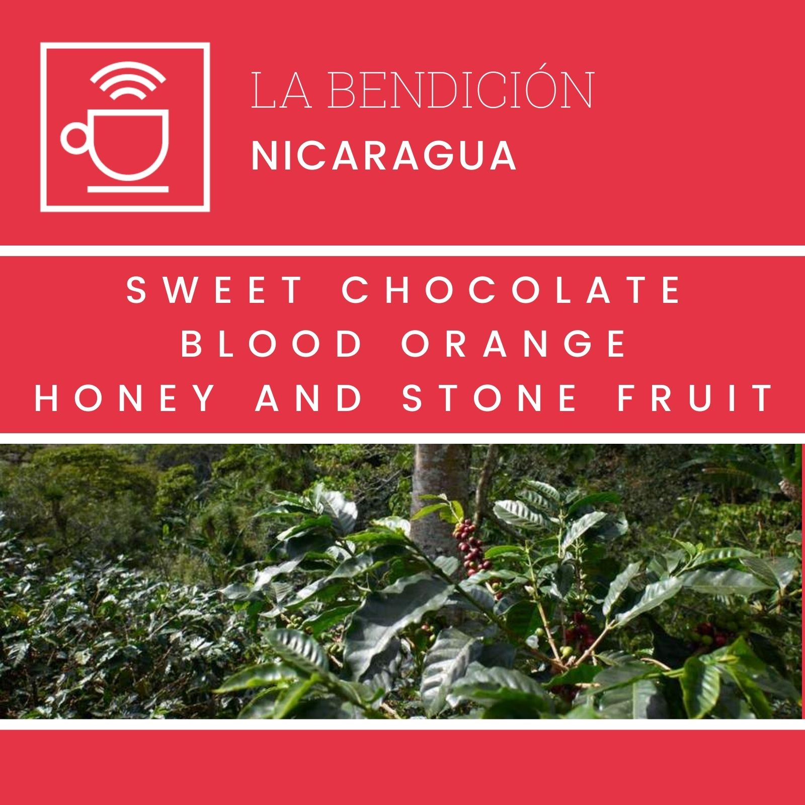 La Bendicion - Nicaragua, Clever Coffee | 250g