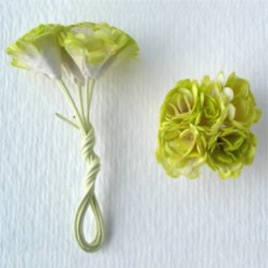 Blomst Krysanthemum Grønn